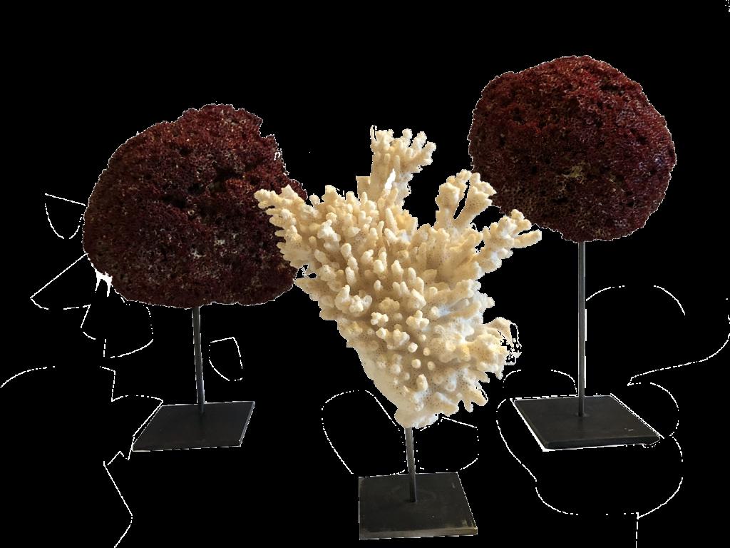 Créateurs d'ambiance - Coral